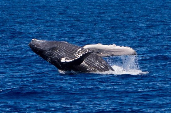 show user reviews pacific whale foundation maalaea maui hawaii
