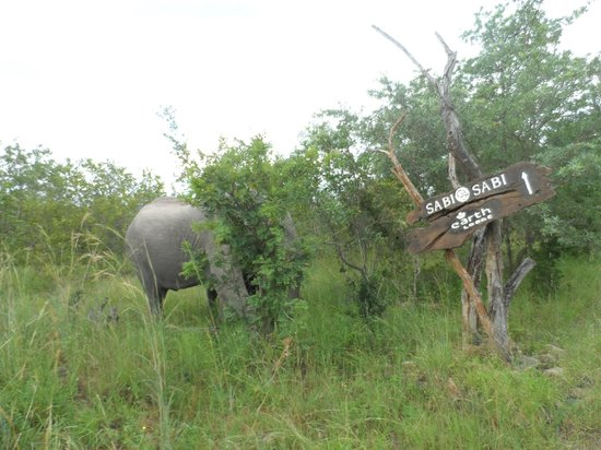 Sabi Sabi Earth Lodge:                                     Only minutes from the lodge!