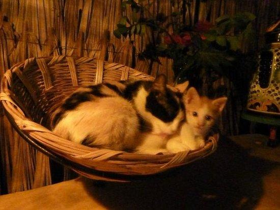 Hostel Candelaria: i loro gattini