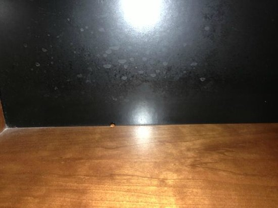Embassy Suites by Hilton Columbia - Greystone :                   lady bug on furniture