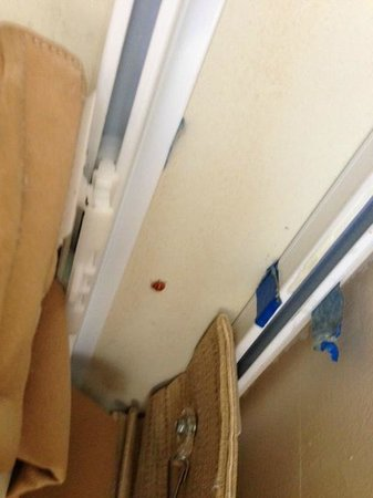 Embassy Suites by Hilton Columbia - Greystone:                   lady bugs every where