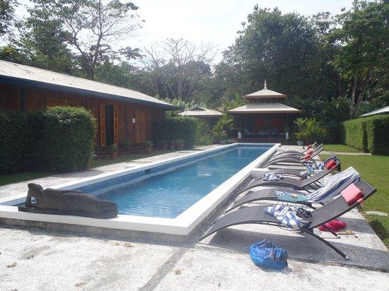 Blue Osa Yoga Retreat and Spa:                   poolside