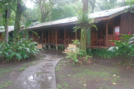 Laguna Lodge Tortuguero:                                     very rustic lodge! about 6 units per building