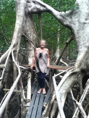 Sao Jeronimo Farm : a walk amongst the incredible mangroves