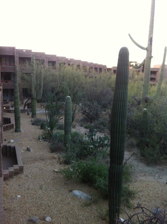 Loews Ventana Canyon Resort:                   View from our room!