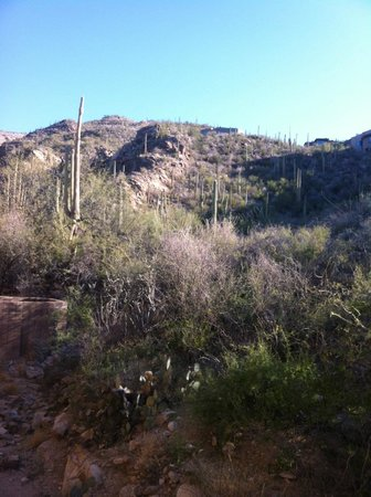 Loews Ventana Canyon Resort:                   Canyon View!