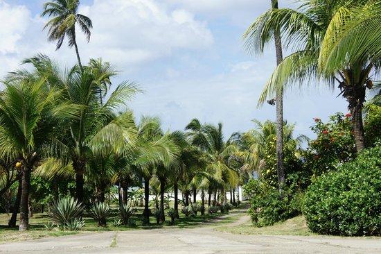 Playa Tranquilo:                   GARDENS