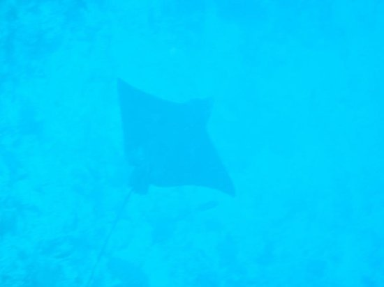 Angsana Velavaru:                   A stingray or something.