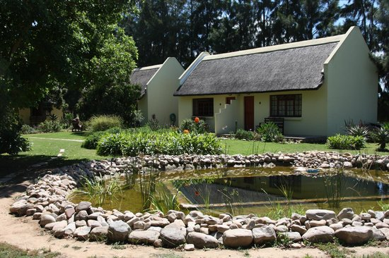 Rosedale Organic Farm B&B:                   the natural swimming pond and cottages