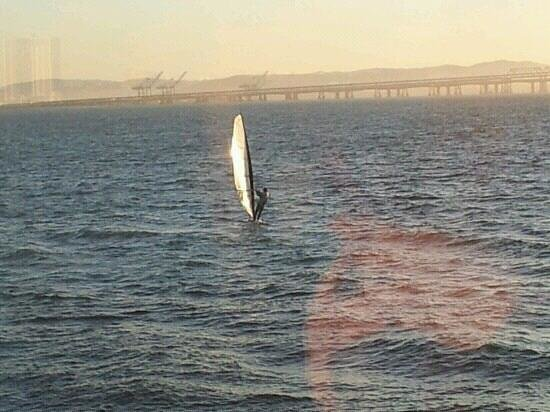 HS Lordships: Windsurfer going past our table