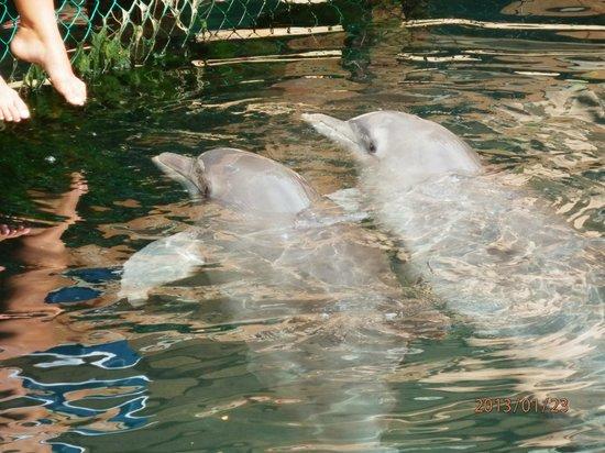 Hotel Riu Playacar:                   Дельфиниум.