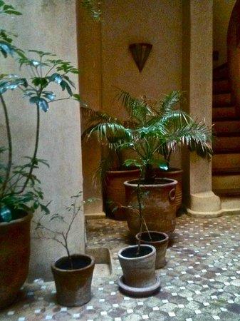 Riad Thais:                                     plants next to stairs