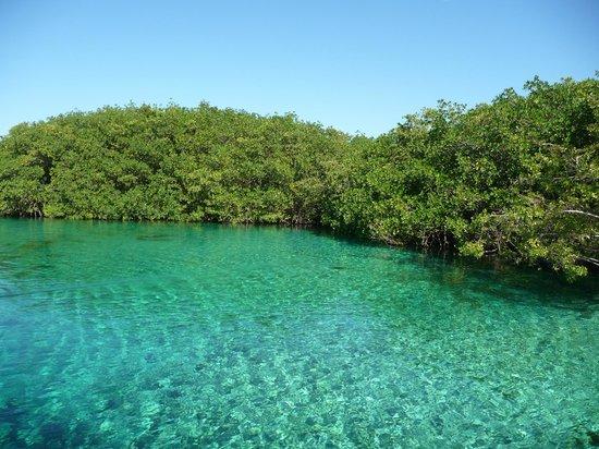Grand Bahia Principe Tulum:                   El cenote..... bellissimo!