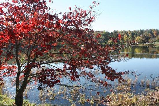 Fall Color at Beaver Lake