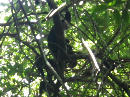 ‪هوتل سان بادا:                   Monkey in Manuel Antonio Park