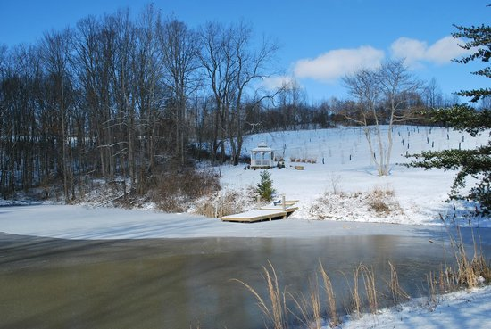 Four Seasons Cabins: pond and gazebo