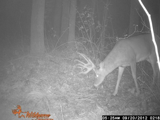 Four Seasons Cabins: Buck from the game camera