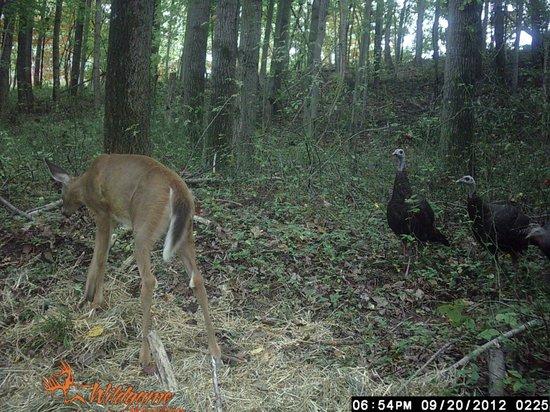 Four Seasons Cabins: Deer