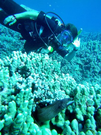 Can Do Dive Co.:                   Moray Eel and me hangin out in the ocean