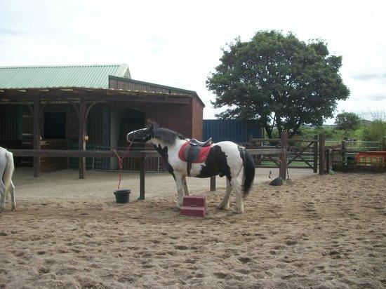 Ponderosa Rural Therapeutic Centre: horse rides