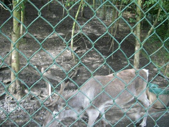 Ponderosa Rural Therapeutic Centre: reindeer