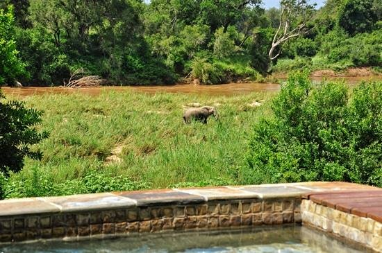 Lion Sands - Tinga Lodge:                   View from the private pool