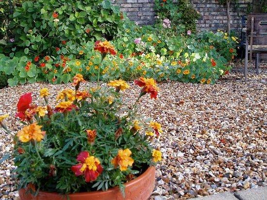 Etruria Townhouse B&B: Etruria Garden