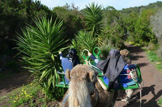 Camello Center:                   Los peques paseando