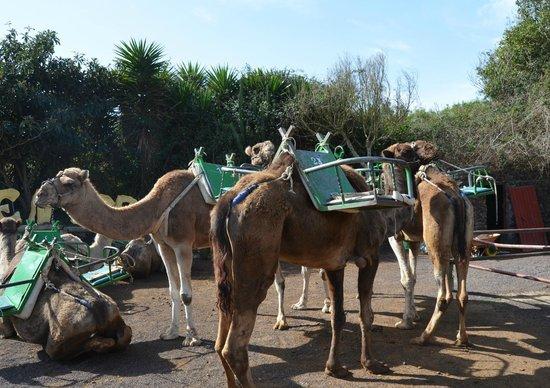 Camello Center:                   Después del paseo...