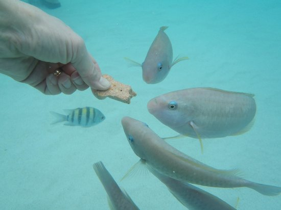 Coki Beach:                   feeding fish                 