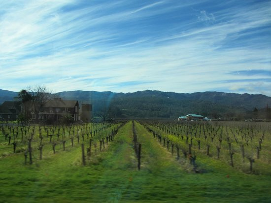 Sutter Home Winery: sutter home