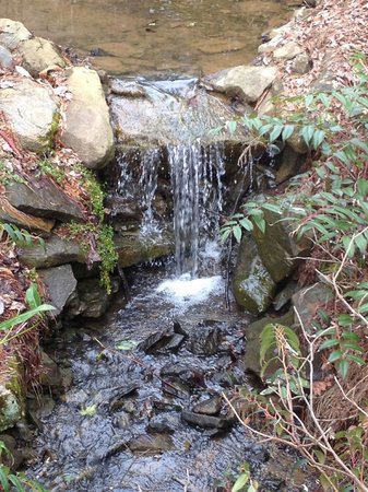 The Yellow House on Plott Creek Road:                   One of a few waterfalls that you can hear from inside The Savannah room.  So p