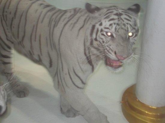 Phuket FantaSea:                   White Tigers