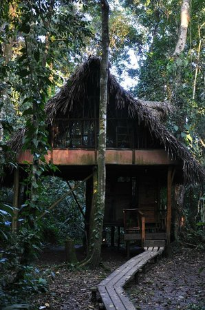Cotton Tree Lodge:                   The Jungle Cabana
