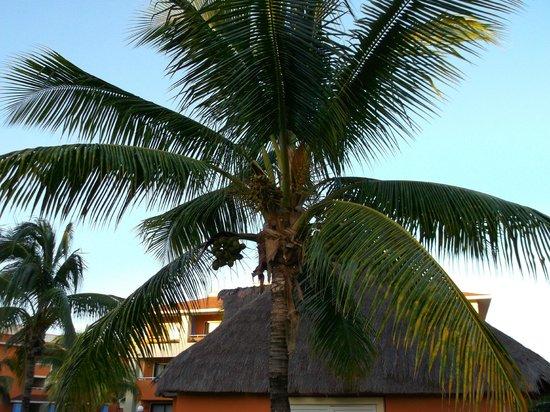Grand Bahia Principe Coba:                   On the road of the rooms                 