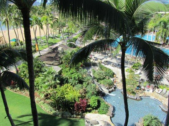 Kaua'i Marriott Resort:                   palms also hid the pool