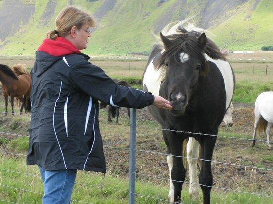 F-Stop Tours:                   Feeding Icelandic Horses