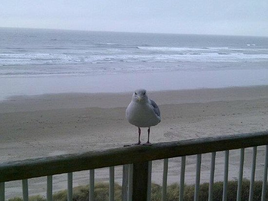 Hallmark Resort Cannon Beach:                   A visitor on our balcony
