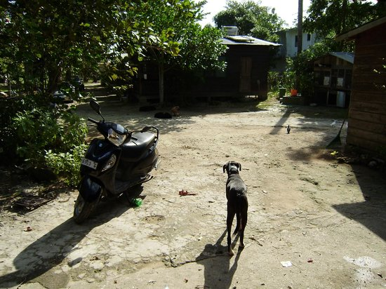 Jah B's Doll House Cottages :                   Gaza checking the yard!