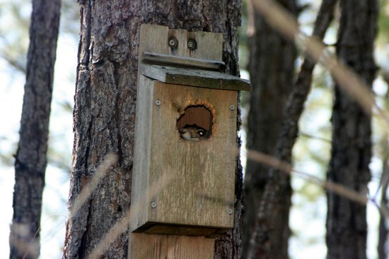 Tibet-Butler Preserve: I spy a squirrel in the birdhouse