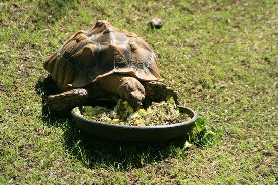 Tibet-Butler Preserve: Tortoise