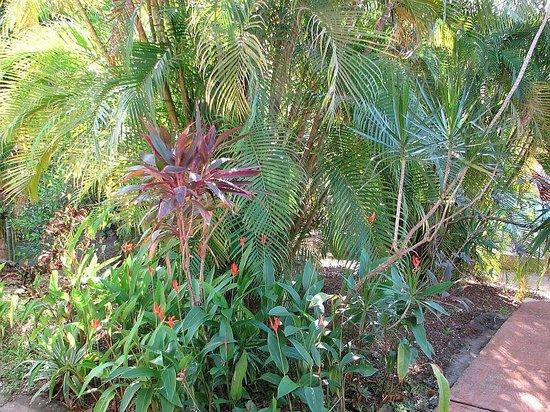 Villa Del Sol: Jardin