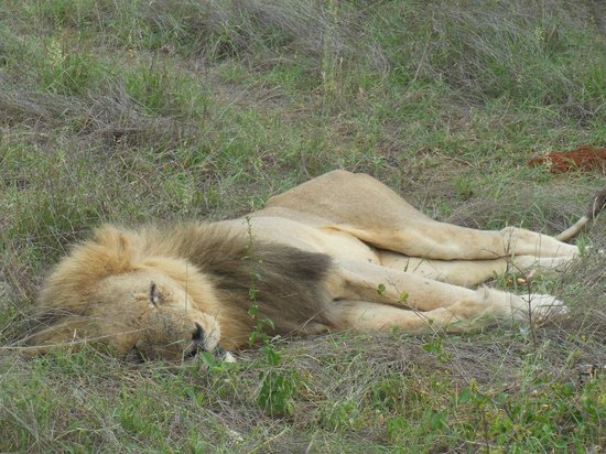 Toro Yaka Bush Lodge:                   Big Boy at rest