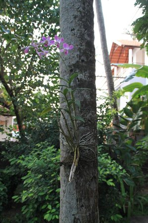 Arabian Soul:                   Orchid grows on the palm tree