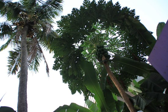 Arabian Soul:                   Palm tree