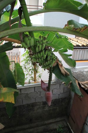 Arabian Soul:                   Banana grows next to the stairs