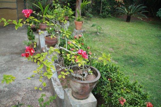 Arabian Soul:                   Garden