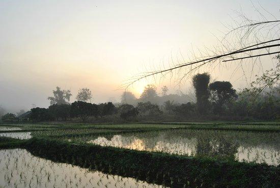 Lisu Lodge: vue imprenable sur la rizière