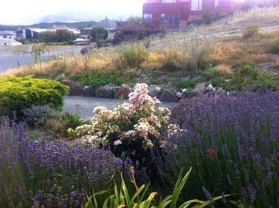 Lake Tekapo Holiday Homes:                   Host grown these flowers at the front yard