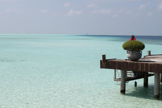 Olhuveli Beach & Spa Resort:                   океан